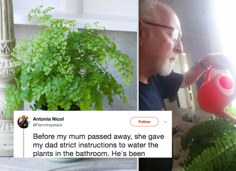A plastic plant that this man's wife told him to water as her dying wish