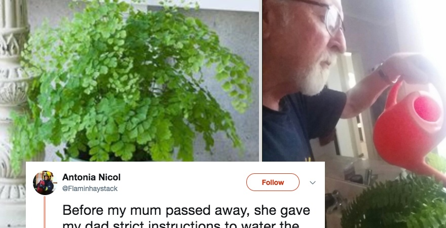 This Woman's Dying Wish To Her Husband Turned Out To Be A Hilarious Prank