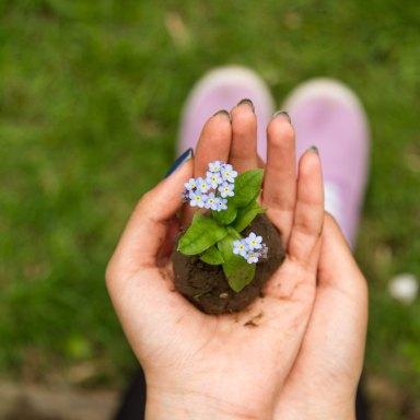 Your Faith Plants A Seed