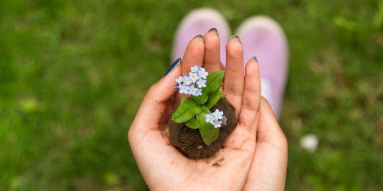 Your Faith Plants ASeed
