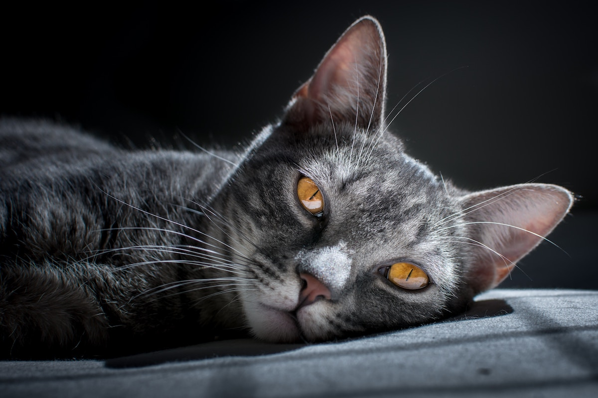 Help! My Pet Is Psychic: 13 People Share Stories Of Their Pet's Supernatural Behavior