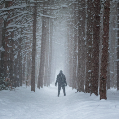 Freaks In The Woods: 17 True Stories Of Scary Encounters Deep In The Forest