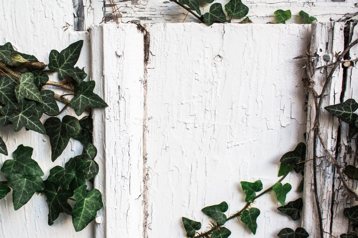 White Background With Greenery & Wood