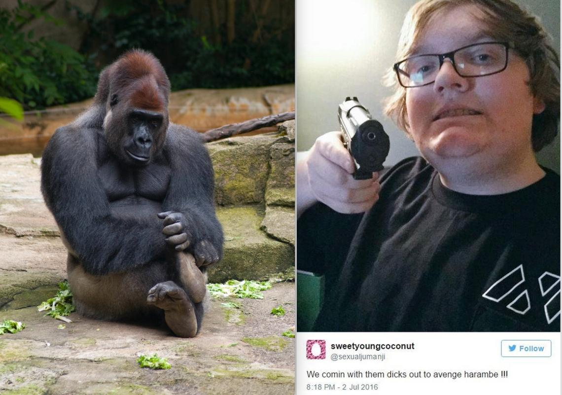 """Harambe at the Cincinnati Zoo in 2011 and the original """"Dicks Out"""" meme"""