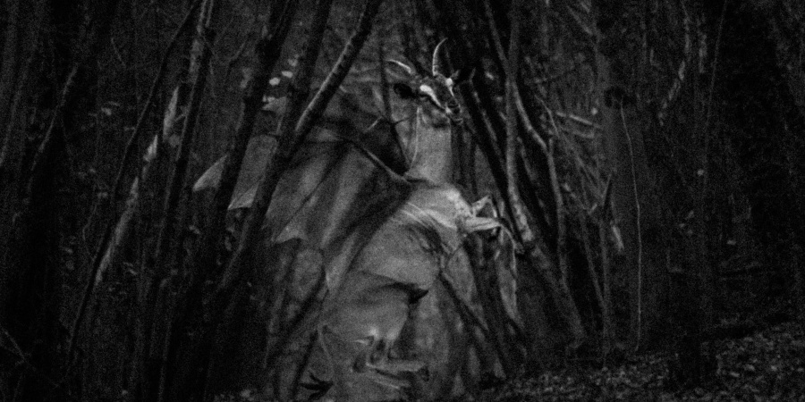 13 Creepy Facts About The Jersey Devil