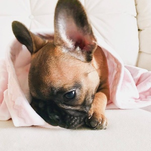 50 Instagram Accounts You Need to Check Out Immediately If You're Obsessed With Dogs