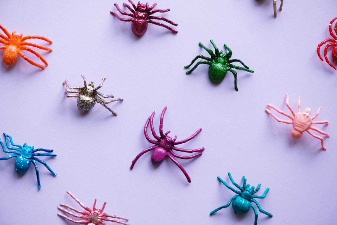 Spiders and bugs