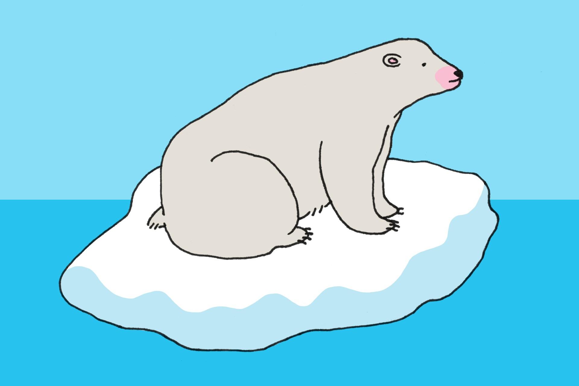 Bear Puns