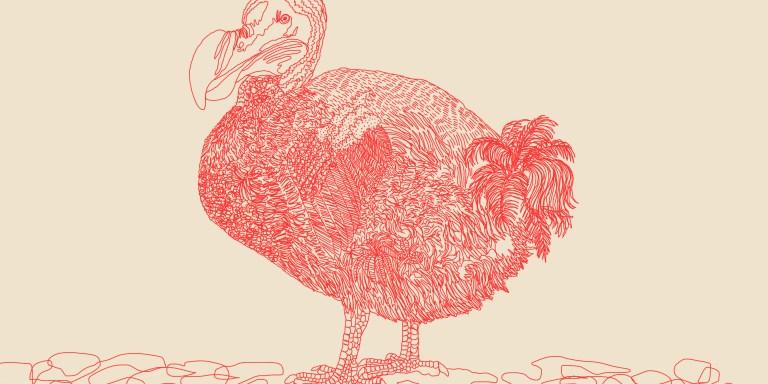 50 Hilarious Bird Puns That Will Have You QuackingUp