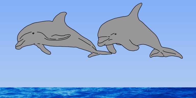 16 Dolphin Puns That Will Make You Flip Out