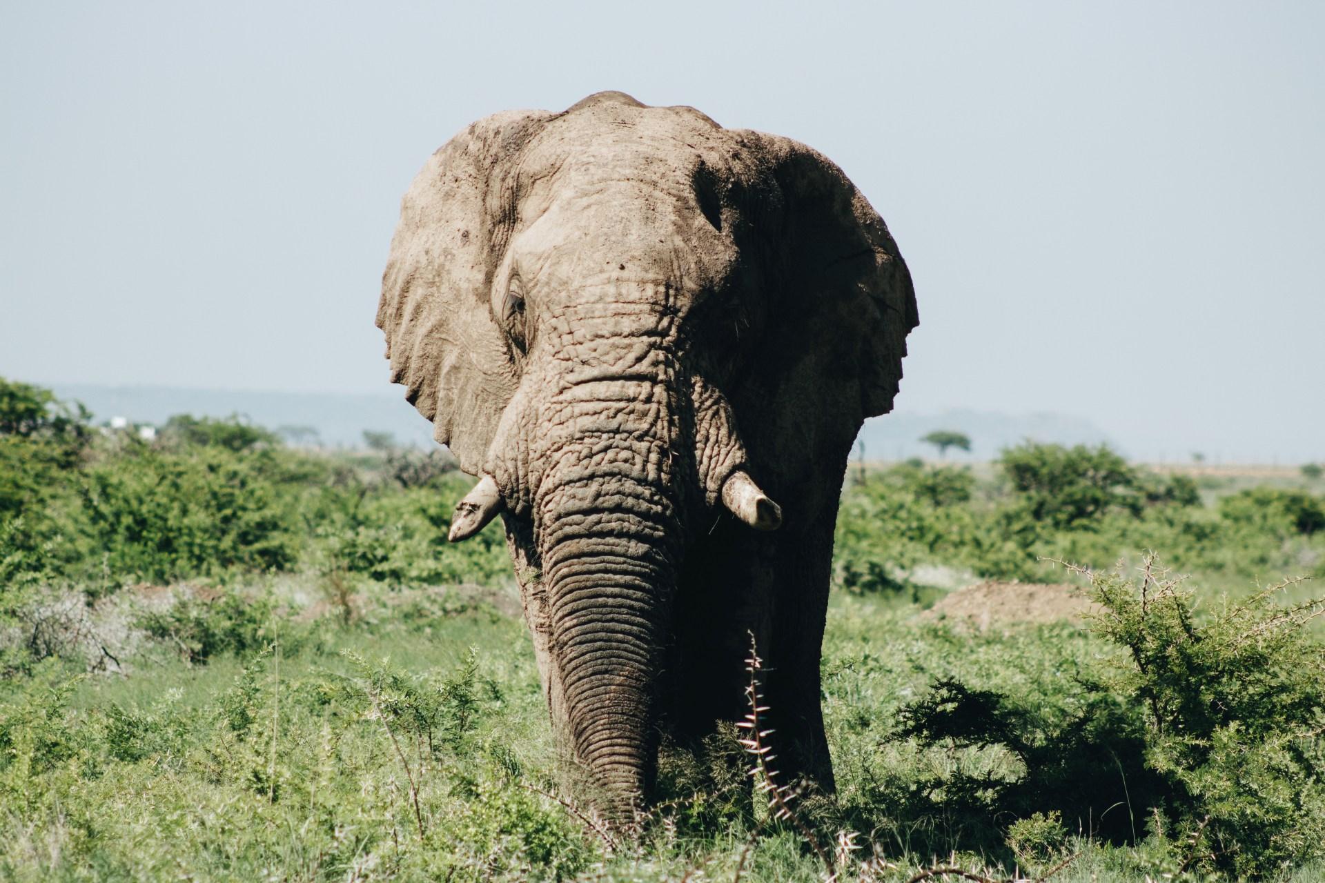 Elephant Puns