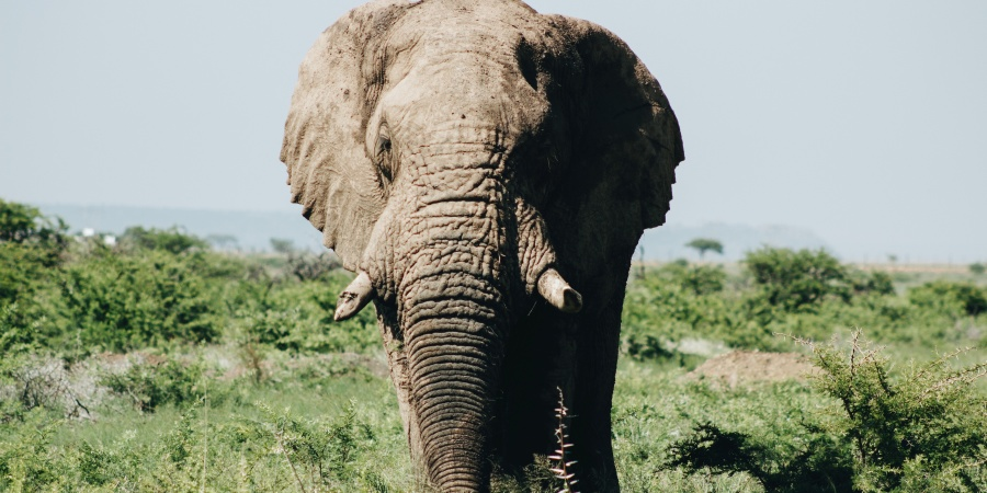 10 Elephant Puns For When You Need A BigLaugh