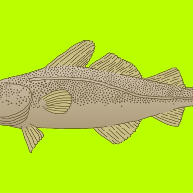 50 Hilarious, Laugh Out Loud Fish Puns