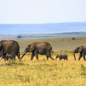 20+ Photos of The Cutest Baby Elephants On Earth