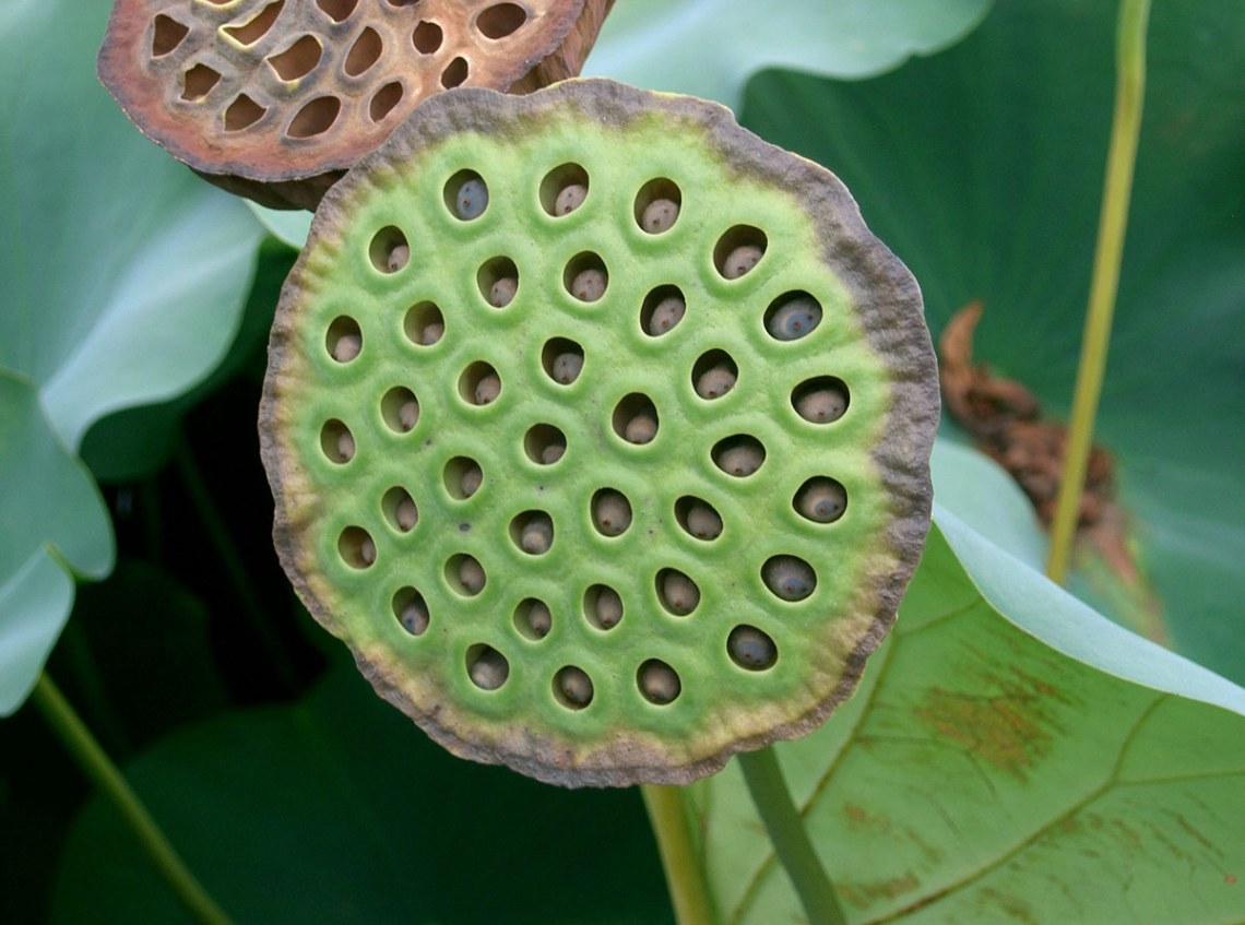 Trypophobia Do Clusters Of Tiny Holes Creep You Out Thought Catalog