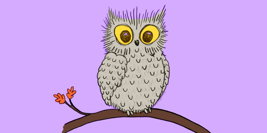 25 Owl Puns That Will Make You Feel Owl TheLOLs