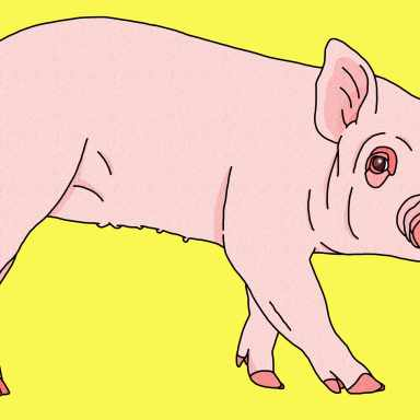 The 15 Best Pig Puns So You Can Hog All The Laughs