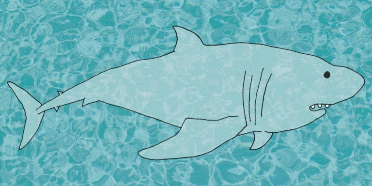 Sink Your Teeth Into These 33 Hysterical Shark Puns