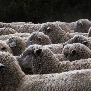 12 Sheep Puns That Wool Definitely Make Ewe Laugh
