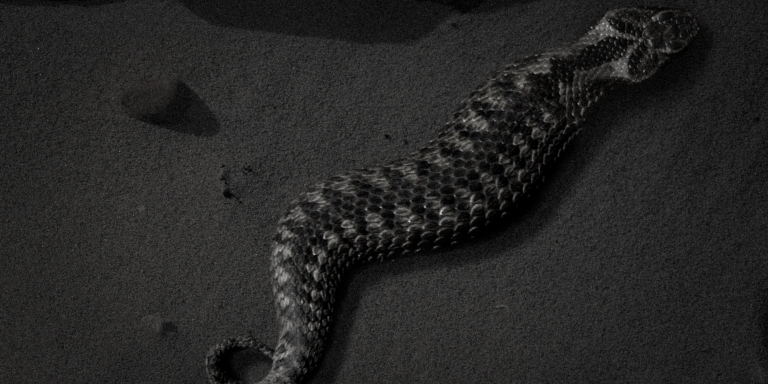 Everything To Know About The Tsuchinoko, The Creepiest 'Animal' You've Never Heard Of