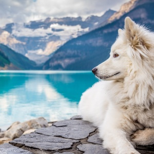200+ Wolf Names That Sound Mysterious And Majestic