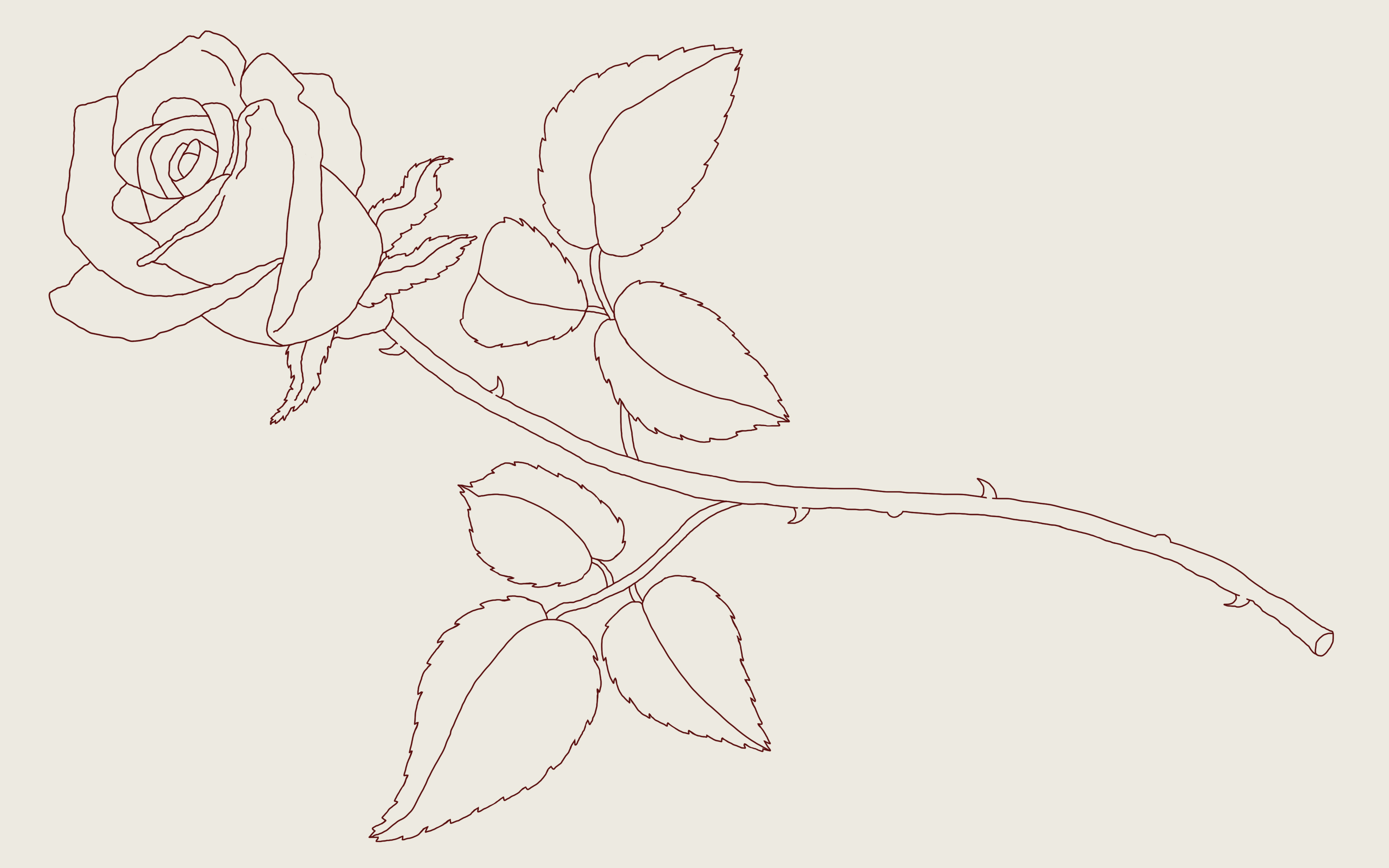How To Draw A Rose A Step By Step Guide 2020 Updated Thought Catalog