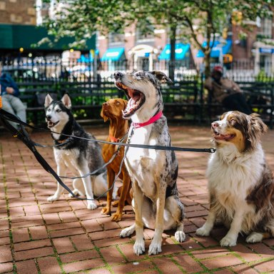 Dogs in a dog park