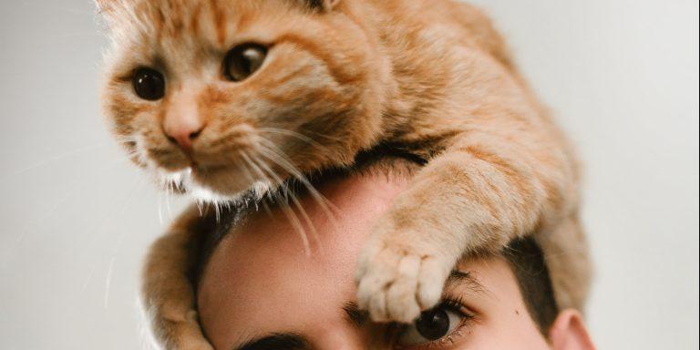Why Do CatsMeow?
