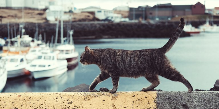 Why Do Cats HateWater?