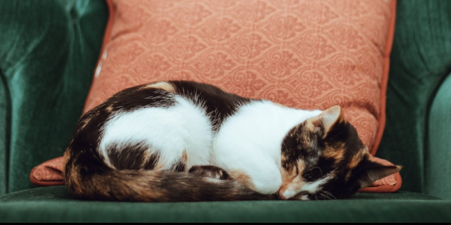Why Do Cats Sleep SoMuch?