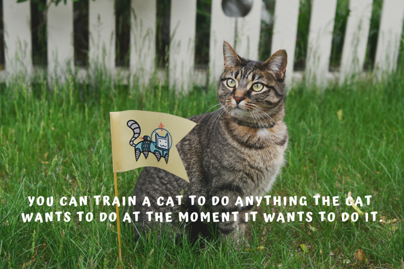 You can train a cat to do anything the cat wants to do at the moment it wants to do it.