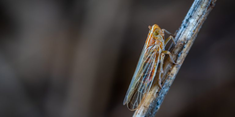 19 Facts About Cicada 3301, A Mysterious InternetPuzzle