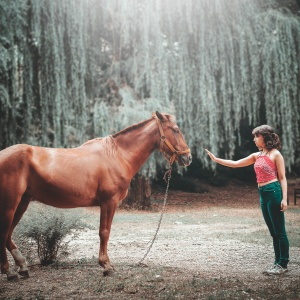 200+ Horse Names For Your Four-Legged Friend