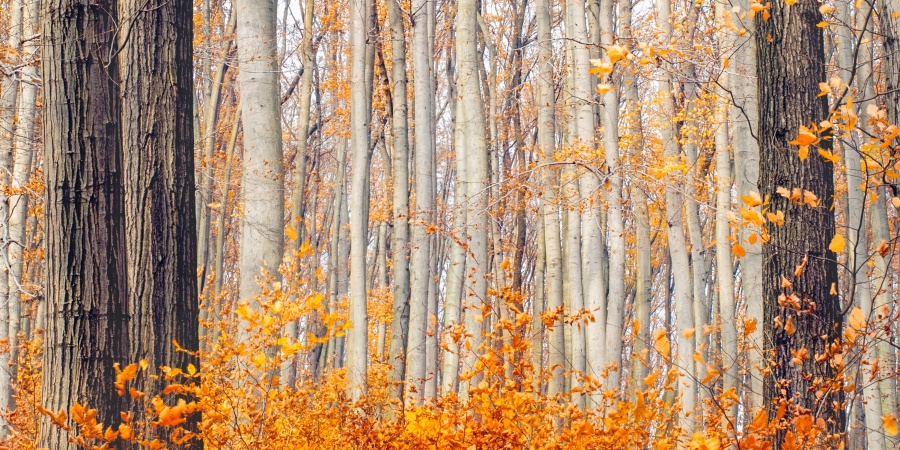 The Autumnal Equinox Is Saturday, September 22nd, And Here's How To Channel That Energy Into YourLife