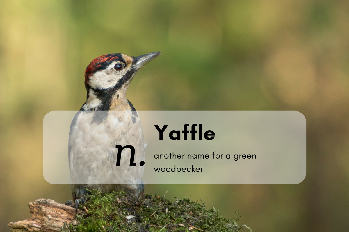 Yaffle (n.)another name for a green woodpecker