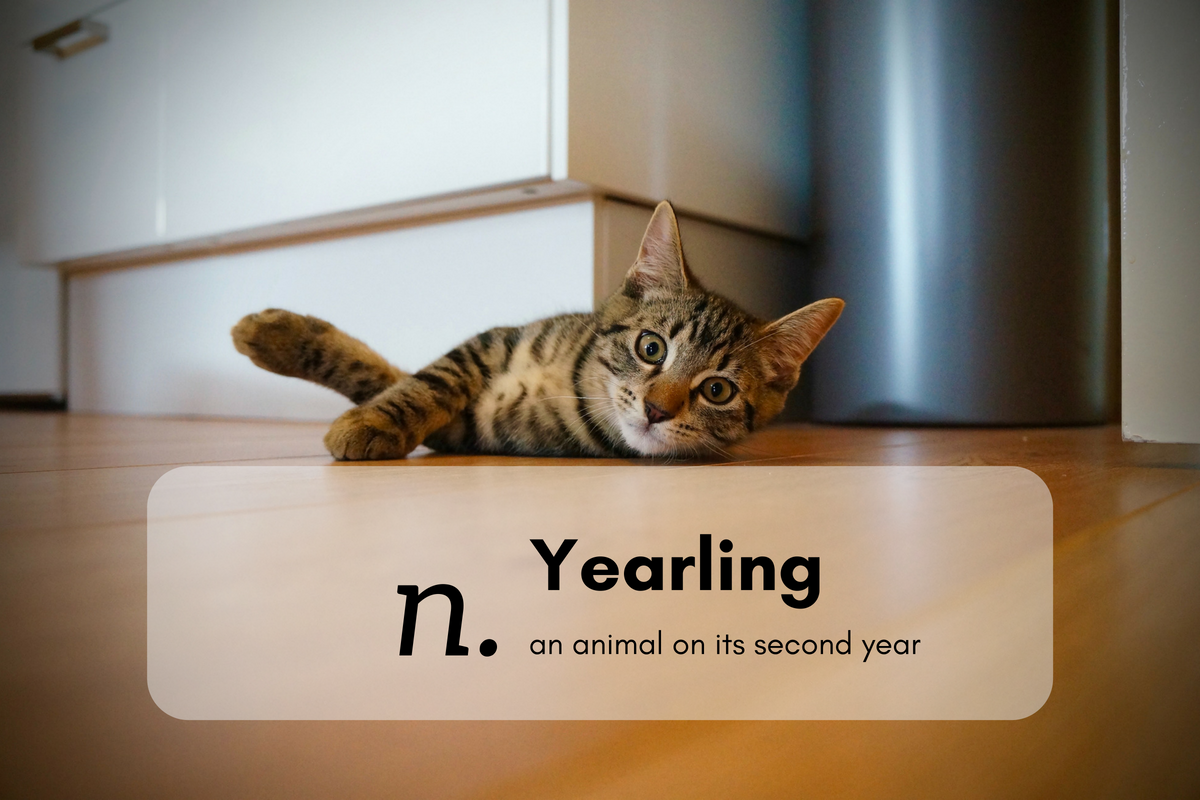 Yearling (n.)an animal on its second year