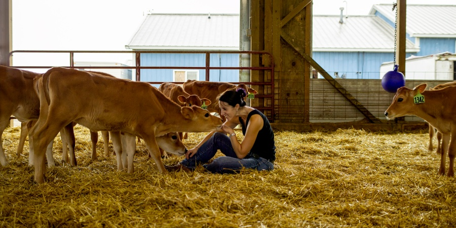 Cow Comfort Is Clearly The Theme At This DairyFarm