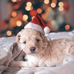 10 Adorable Santa Pet Photos To Get You In The Christmas Spirit