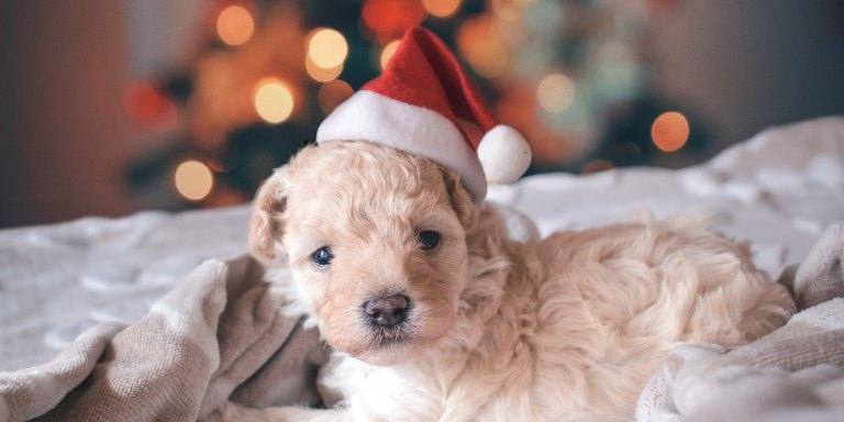 10 Adorable Santa Pet Photos To Get You In The ChristmasSpirit