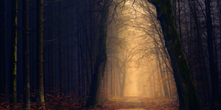 20 People Reveal Their Creepy Experiences In The Woods That Made Them Never Want To Go Back