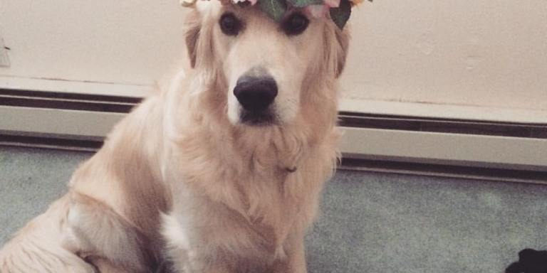 Why My Dog is Probably Jesus (And Yours Might BeToo)