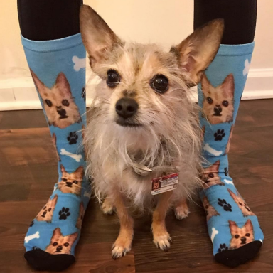 Don't Even Pretend You're Not Going To Buy A Pair Of These Adorable Custom-Printed Pet Socks
