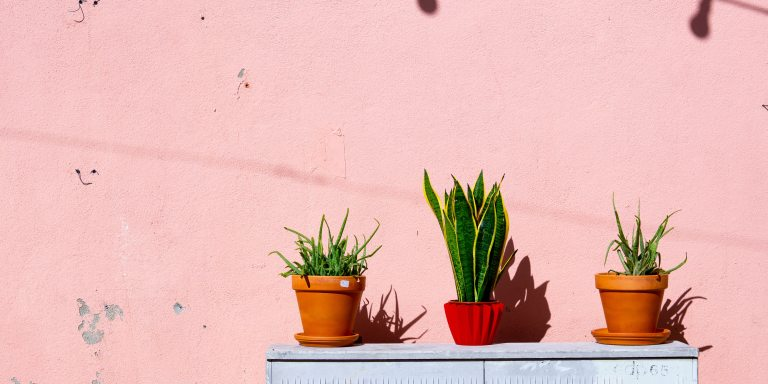 How Houseplants Help Millennials Struggling With Their Mental Health