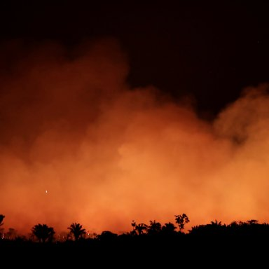 The Amazon Is Burning, Here's How You Can Help