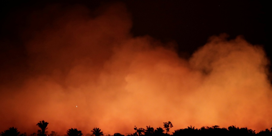 The Amazon Is Burning, Here's How You CanHelp