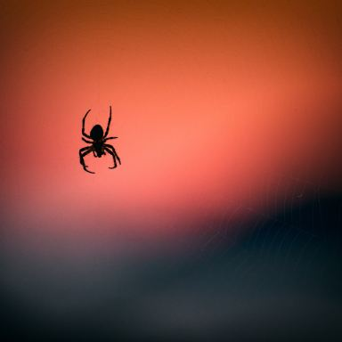 The Spiders Under Your Skin