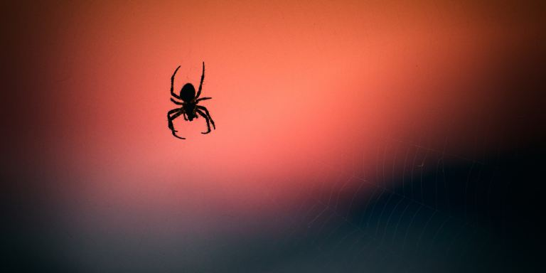 The Spiders Under YourSkin