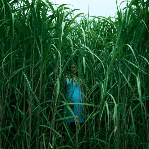 11 Things You Missed In 'In The Tall Grass'