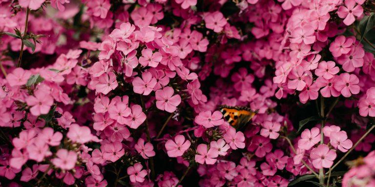 When The Butterflies Aren'tButterflies