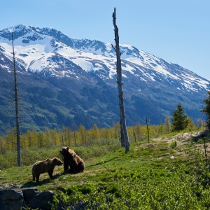 A Tale Of Two Tree Planters: Surviving A Bear Encounter In The Backcountry